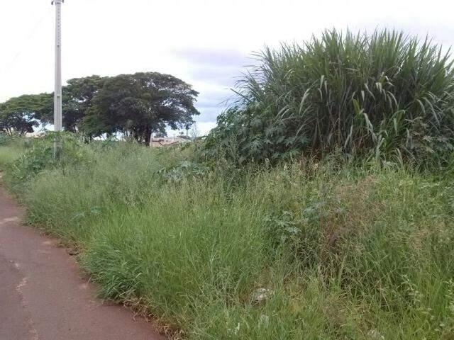O terreno fica localizado na Rua Albatroz, no Bairro Morada Verde. (Foto: Direto das Ruas)