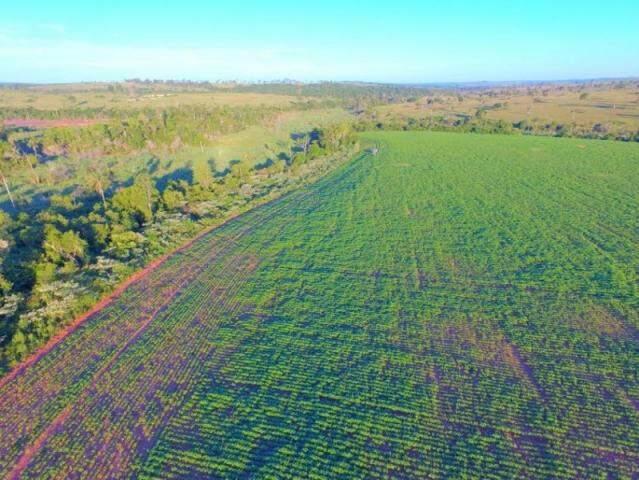 Plantio já está em desenvolvimento em área desmatada (Foto: Divulgação/PMA)