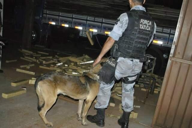 No total, foram apreendidas mais de 3 toneladas de maconha. (Foto: Osvaldo Duarte)