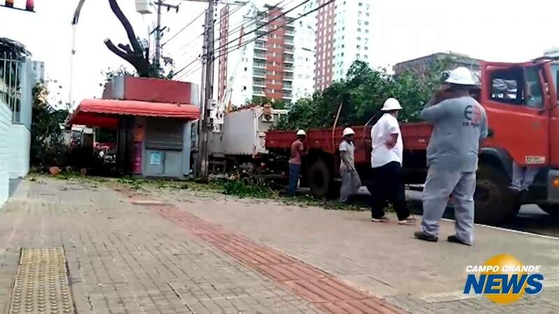 Banca reabre após corte de árvore; restos vão ficar até domingo