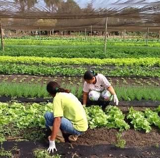 Inclusão de alimentos produzidos pela agricultura familiar é tema de Conferência