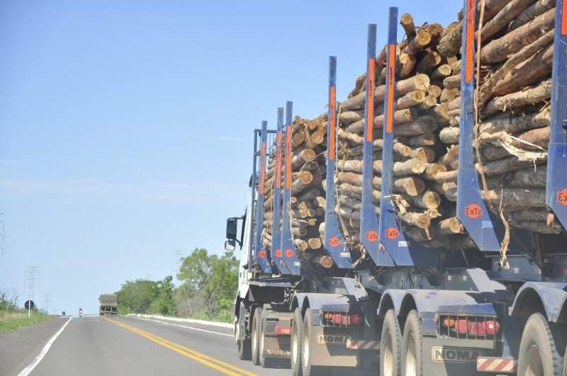 Carretas com madeira já são vistas na BR-262 em direção a Três Lagoas (Foto: João Garrigó/Arquivo)