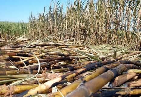 Rio Brilhante é o 2º maior produtor de cana do país, aponta IBGE