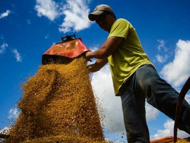 Estima-se que a plantação do grão na safra 2016/2017 tenha atingido 2,520 milhões de hectares com volume de grãos projetados em 7,787 milhões de toneladas (Foto: Marcos Ermínio)