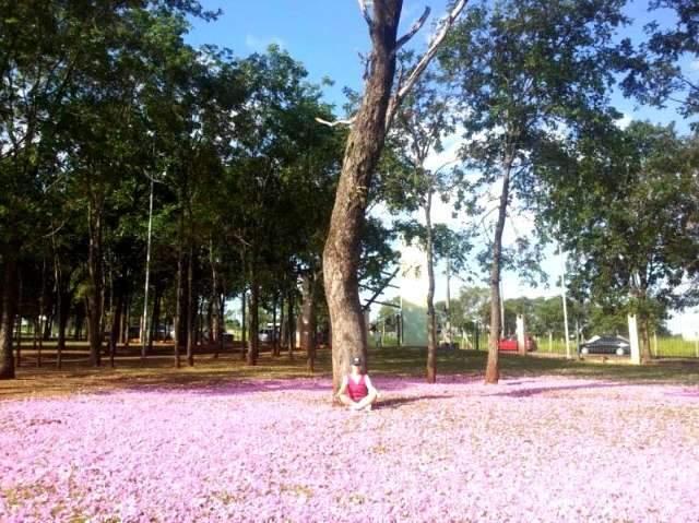 Campo Grande tem ipê, mas outras flores também embelezam a cidade