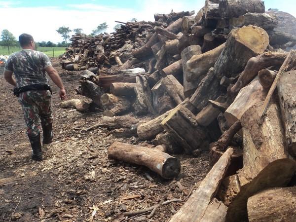 A PMA apreendeu 136 m³ de lenha e 25 m³ de carvão nativos sem origem. (Foto: Divulgação PMA)