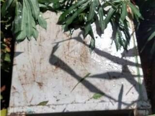 Cofre foi encontrado escondido em plantação de mandioca  (Foto:  divulgação/Polícia Civil)