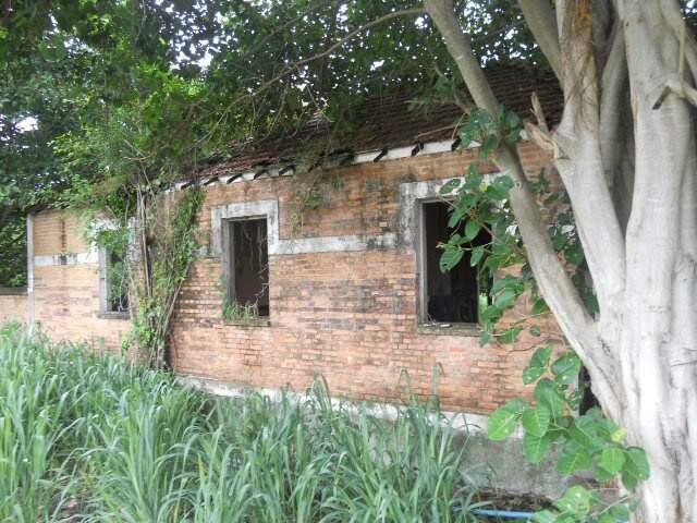 O tempo fez nascer árvores dentre as ruínas de boa parte do roteiro desenhado pelo ex-garçom