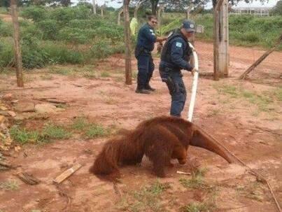 Animal foi resgatado por policiais. (Foto: Divulgação)