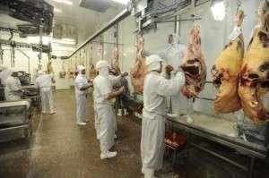 Estado abate 118 mil cabeças de gado a menos em 2015, segundo IBGE