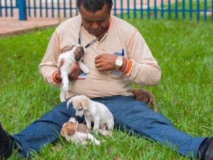 CCZ faz no domingo ação para adoção de gatos e cães resgatados na Capital
