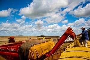 Apesar do clima, produção de soja chegou a 6,3 milhões de toneladas em MS