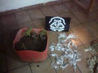 Mudas de maconha e papelotes encontrados na casa do traficante (Foto: Direto das Ruas)