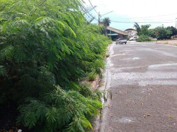 Na rua do Oásis, o mato tomou conta de calçada. (Foto: Adriano Fernandes)