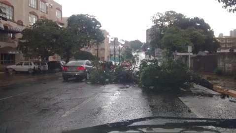 Árvores caem e, pelo menos, 5 bairros ficam sem energia em Campo Grande