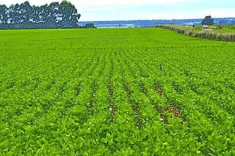Encerra hoje prazo para cadastramento da área plantada de soja em MS