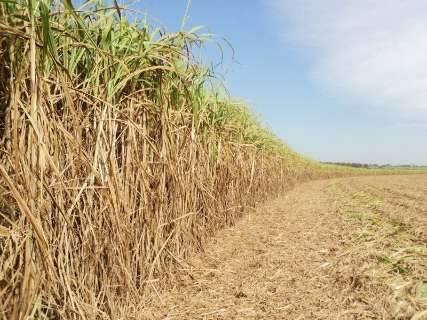 Cana-de-açúcar pode aumentar 11% no valor bruto da produção em 2015