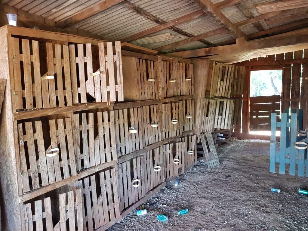 Gaiolas onde galos de briga eram mantidos, em uma propriedade rural em Dourados (Foto: Divulgação)