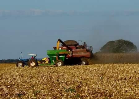 Produção de milho no Estado aumentou 130% nos últimos 5 anos