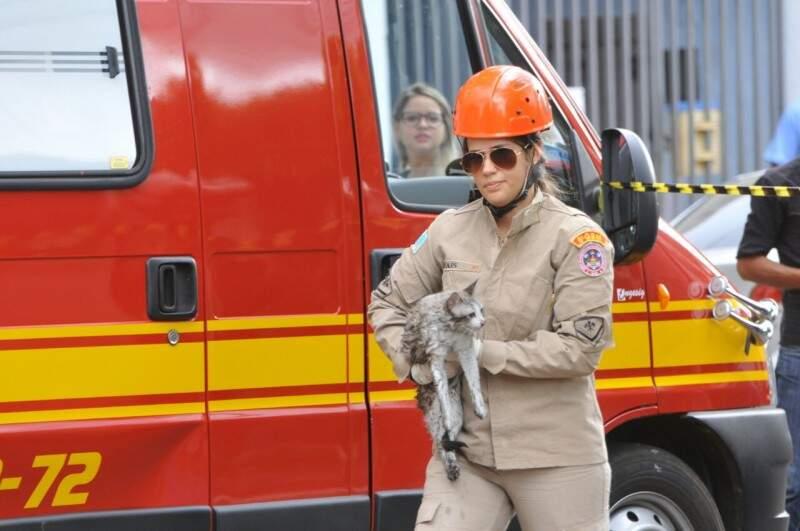 Bombeiro segura gatinho salvo no local do incêndio (Foto: Alcides Neto)