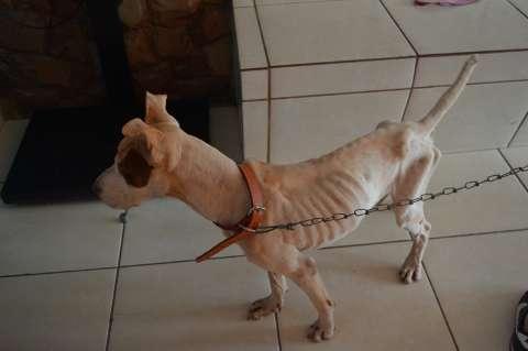 Protetores colhem assinaturas para que cão que definhava não volte à dona