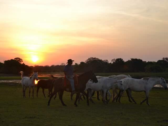 Homem e cavalo pantaneiro. A exuberância do Pantanal da Nhecolândia vista de perto durante três dias. É esta a proposta da 5ª Cavalgada no Pantanal. (Foto: Paula Maciulevicius)