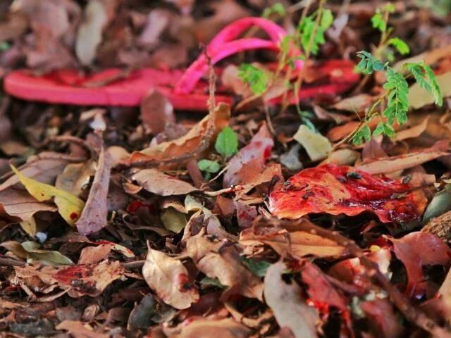 Chinelo e sangue da vítima ficaram entre as folhas (Foto: Fernando Antunes)
