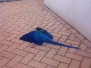 Arara foi encontrada morta no quinta de casa. (Foto: Reprodução/Facebook)