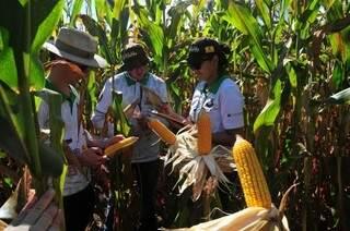 Rally leva analistas a fazendas de Dourados e Naviraí, nesta semana (Foto: Marcos Campos/Rally da Safra)