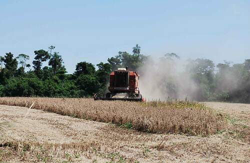 Setor agropecuário figura entre as principais atividades econômicas do Município (Foto: Divulgação)
