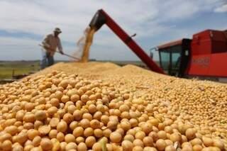Lagarta é ameaça à soja, um dos principais componentes da economia do Estado. (Foto: Divulgação)