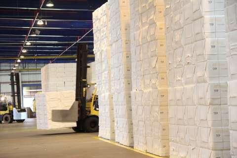 Exportações de celulose crescem 12%, mas industrializados caem 4%