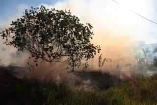 Fogo e muita fumaça em terreno na avenida Norte. (Foto: Fernando Antunes)