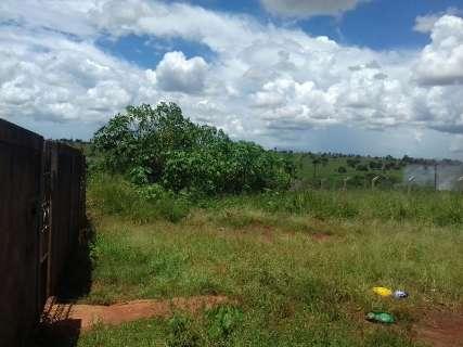 Preocupação com mato alto em bairro vai de dengue até animais peçonhentos