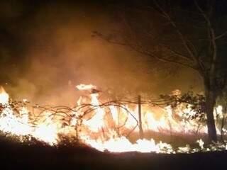 No Parque dos Poderes, chamas estão altas em vegetação. (Foto: Reprodução/WhatsApp)