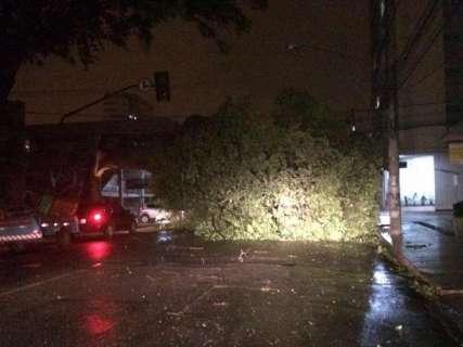 Ventania e chuva derrubam árvore e deixam bairros da Capital sem energia