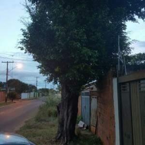 Vizinho diz que árvore no Santa Emília corre risco de queda sobre quatro casas