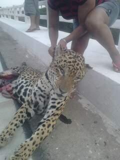 Carcaça foi encontrada por turistas que seguiam para Corumbá.
