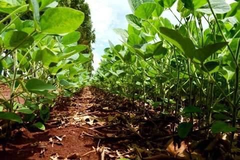 Chuva ajuda, plantio da soja avança e chega a 68% das lavouras de MS