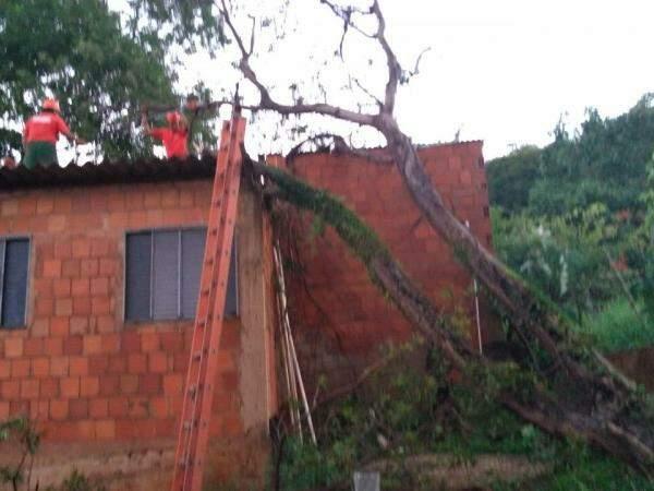 Três árvores caíram durante a chuva (Foto: Divulgação/Bombeiros)