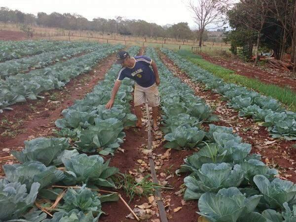 A produção vem de assentamento no distrito de Terenos. (Foto: Assessoria de Imprensa)