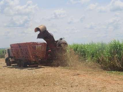 Volume de cana-de-açúcar processada é 10,22% maior do que em outubro de 2014