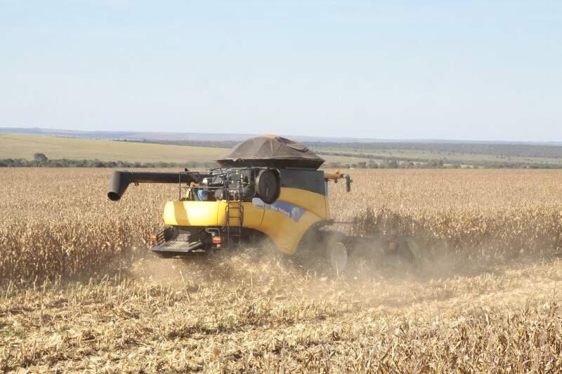 Um dos principais produtos de MS, milho atraiu empresa chinesa que prevê investir US$ 320 milhões (Foto: Cleber Gellio)