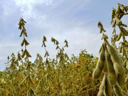 Após instabilidade climática, produtores apostam na recuperação da safra de soja