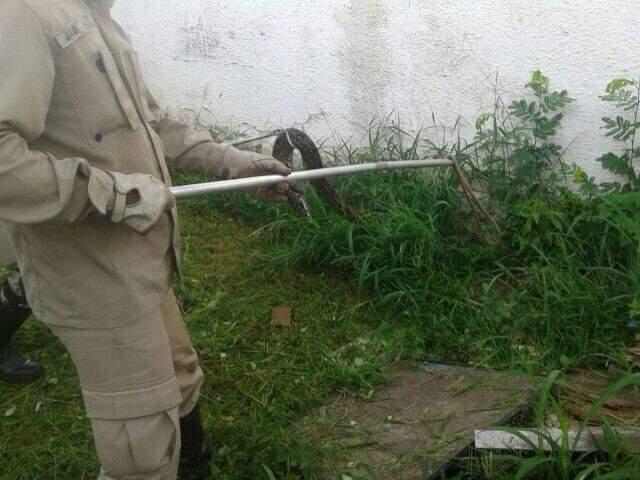 Cobras foram soltas em mata próxima ao Rio Paraguai (Foto: Divulgação/Bombeiros)
