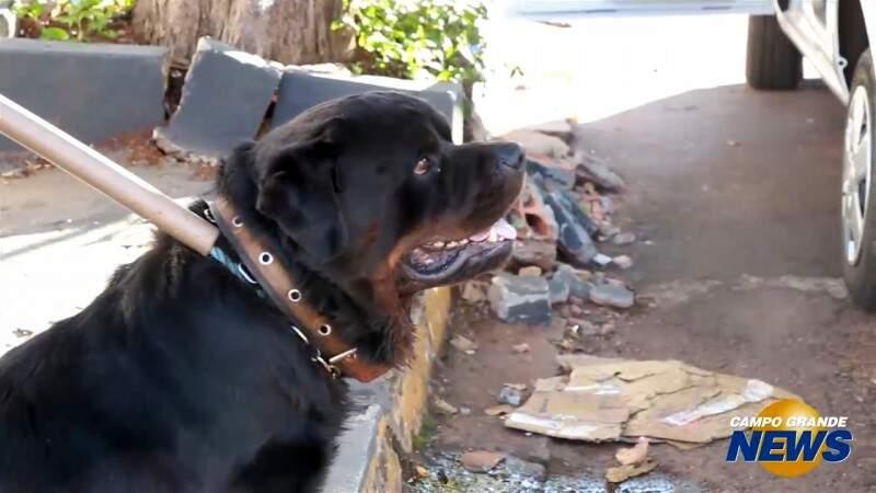 Rottweiler solto assusta moradores no São Francisco