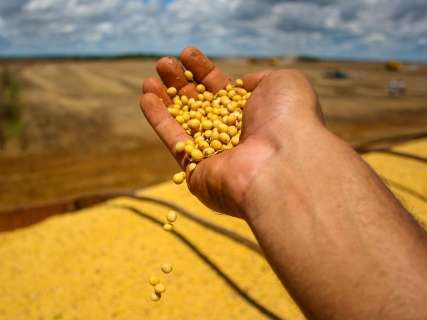 Medo da estiagem faz venda antecipada da soja cair 18% em MS