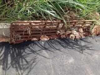 O asfalto obstruiu o entrada de água