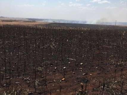 Proprietários rurais acusam índios de atear fogo em plantação de milho