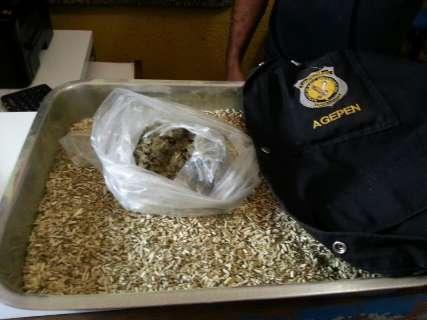 Mulher é presa ao entrar em presídio com droga camuflada em erva de tereré